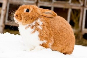 FSSAI proposes inclusion of Leporidae, rabbit family, in meat and meat products