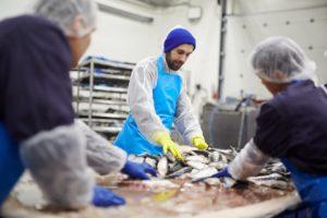 Fish Processing Units